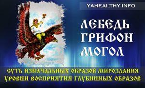 Лебедь, Грифон, Могол