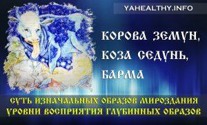 Корова Земун, Коза Седунь, Барма