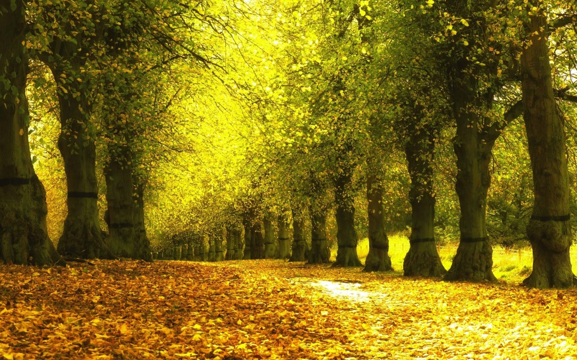 Настоящие Звуки Леса, пение птиц, звуки природы, для сна и релакса.