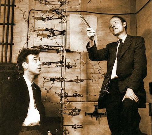 Дж. Уотсон и Ф. Крик со своей моделью ДНК