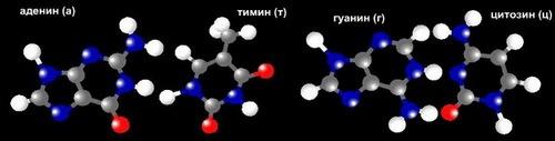 нуклеивые кислоты