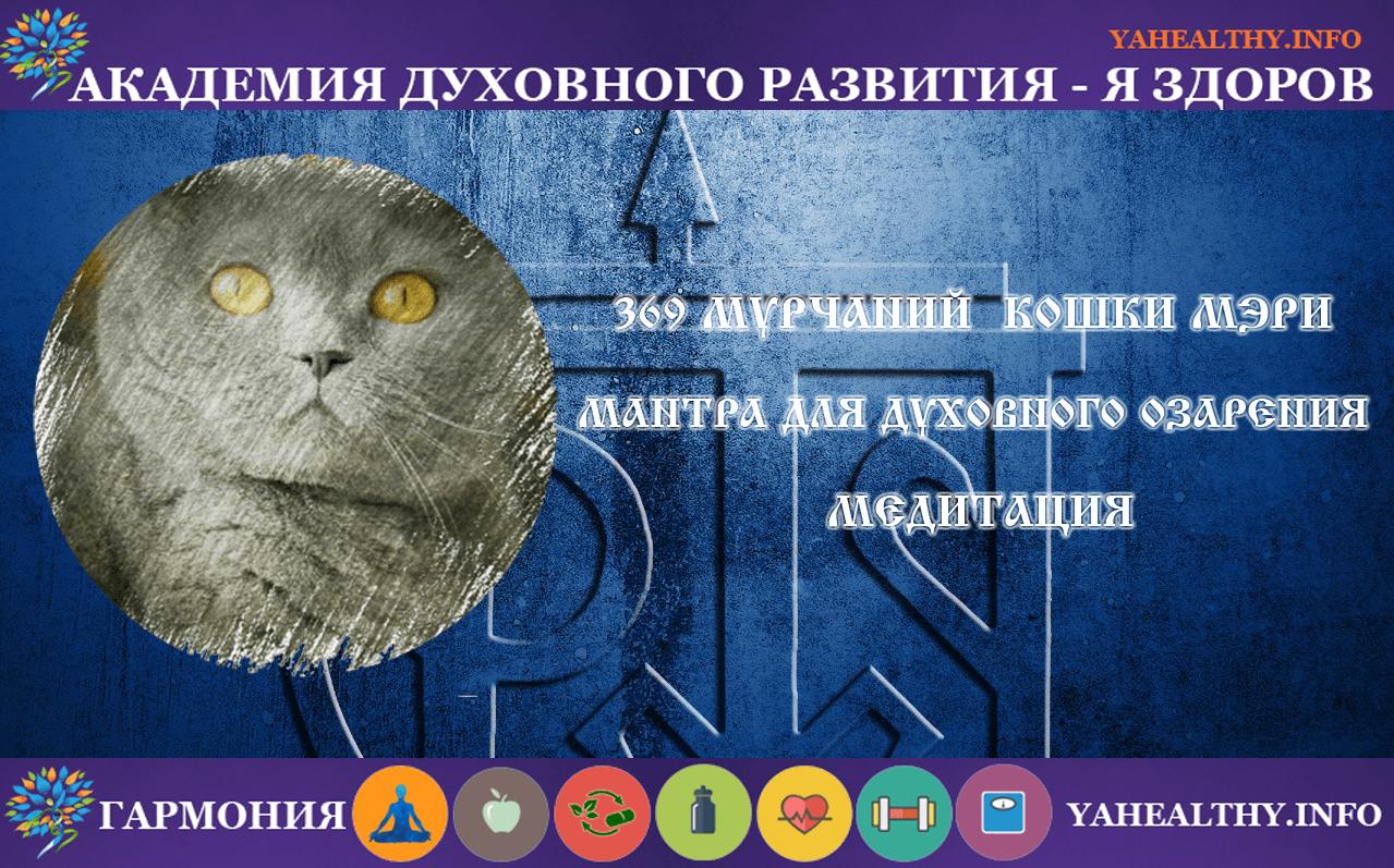 🎧 369 мурчаний проСВЕТленной кошки Мэри