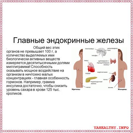 Число вихрей соответствует количеству (9) желез внутренней секреции организма человека: