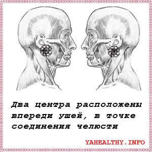 Два центра расположены впереди ушей, в точке соединения челюсти