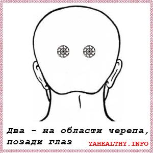 Два - на области черепа, позади глаз;